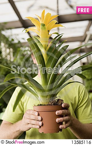 Man holding exotic potted plant Stock Photo