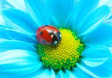 Free Ladybug On Flower Stock Photos - 13582383