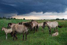 Free Wild Horses Royalty Free Stock Image - 13582386
