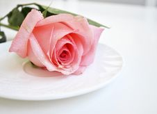 Free Pink Rose Stock Photography - 13583652