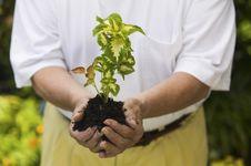 Free Senior Man Holding Seedling In Garden Stock Images - 13584784