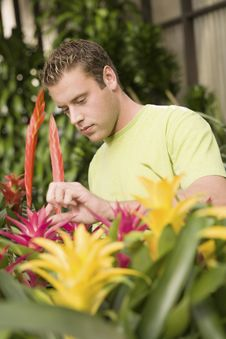 Man Looking At Exotic Potted Plants In Greenhouse Stock Photo