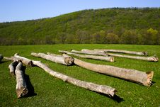 Free Wood Royalty Free Stock Photography - 13588827