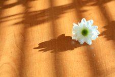 Free White Flower Stock Photo - 13589270