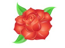 Free Red Rose Royalty Free Stock Image - 13589546