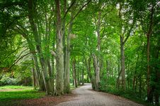 Free Tree, Woodland, Green, Nature Stock Image - 135806181