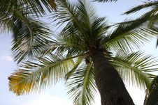 Free Sky, Tree, Vegetation, Palm Tree Stock Image - 135806321