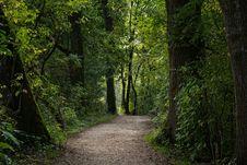 Free Forest, Woodland, Nature, Vegetation Stock Image - 135806541