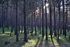 Free Ecosystem, Forest, Woodland, Spruce Fir Forest Royalty Free Stock Image - 135806646
