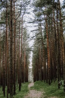 Free Spruce Fir Forest, Ecosystem, Tree, Forest Stock Photo - 135806660