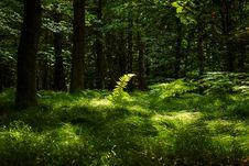 Free Vegetation, Woodland, Nature, Ecosystem Royalty Free Stock Photography - 135806727