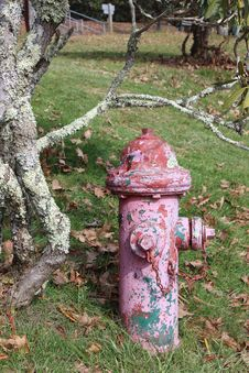 Free Grass, Tree, Plant, Fire Hydrant Royalty Free Stock Photography - 135806737