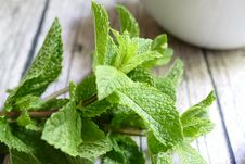 Free Leaf, Herb, Plant, Peppermint Royalty Free Stock Photo - 135806795