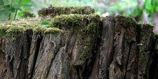 Free Vegetation, Tree, Trunk, Moss Stock Photo - 135807220