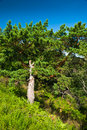Free Bright Green Pine-tree On A Grassy Hill Stock Photos - 13594573
