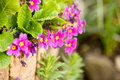 Free Delicate Pink & Yellow Flowers In Wood Pail Stock Photography - 13594642