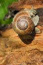 Free Snail On A Tree Bark Royalty Free Stock Photos - 13595838