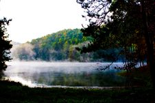 Free Mist In Forest Stock Images - 13590664