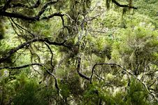 Free The Mountain Forest Stock Photography - 13591272