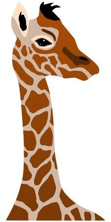 Giraffe Cub Stock Photos
