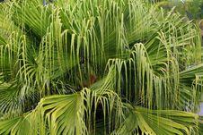 Free Palm Tree Stock Photos - 13591813