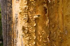 Free Tree Trunk Abstract Stock Image - 13592041