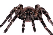 Close-up Of Big Spider Tarantula Stock Photos