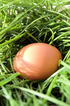 Free Chicken Brown Egg Royalty Free Stock Image - 13593126
