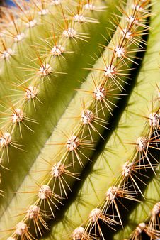 Free Cactus Spines Stock Photography - 13593462