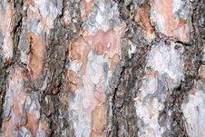 Free Pine Bark Stock Images - 13594044