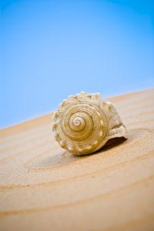Free Seashell Stock Photos - 13594323