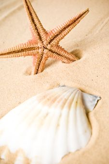 Free Seashell Royalty Free Stock Photography - 13594397