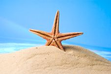 Free Starfish Stock Photos - 13594403