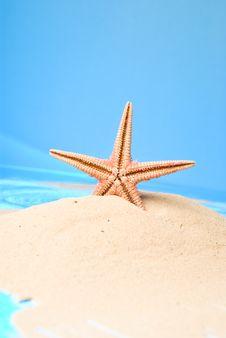 Free Starfish Royalty Free Stock Image - 13594406