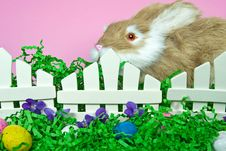 Free Easter Hopper Royalty Free Stock Image - 13594576