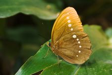 Free A Butterfly Rested On The Leaf Royalty Free Stock Photo - 13595085