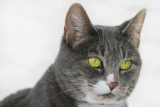 Free Cat S Face Royalty Free Stock Photography - 13595587