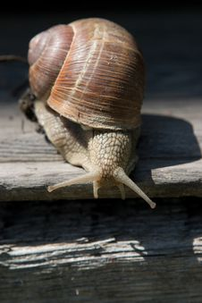 Free Snail On A Tree Bark Stock Image - 13595811