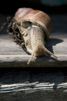 Free Snail On A Tree Bark Stock Images - 13595814