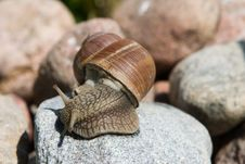 Free Snail On A Granite Stock Image - 13595841