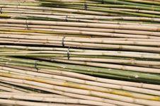 Free Bamboo Stalks In Bundle Stock Image - 13598691