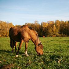 Free Horse In The Meadow Stock Photos - 13598853
