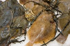 Free Fresh Raw Fish In Supermarket Stock Photos - 13599273