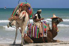 Free Camel, Arabian Camel, Beach, Camel Like Mammal Royalty Free Stock Photo - 135982025
