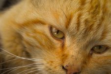 Free Cat, Whiskers, Fauna, Eye Royalty Free Stock Photos - 135982068