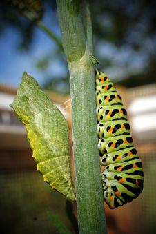 Free Caterpillar, Larva, Leaf, Flora Stock Image - 135982141