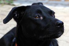 Free Dog, Dog Like Mammal, Black, Dog Breed Stock Photos - 135982233
