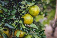 Free Citrus, Fruit, Citron, Produce Royalty Free Stock Images - 135982499