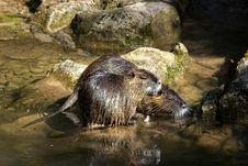 Free Mammal, Fauna, Otter, Water Stock Photography - 135982542