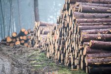 Free Wood, Logging, Lumber, Tree Royalty Free Stock Images - 135982549